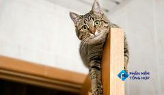 8 High-Flying Accessories for Climbing Cats