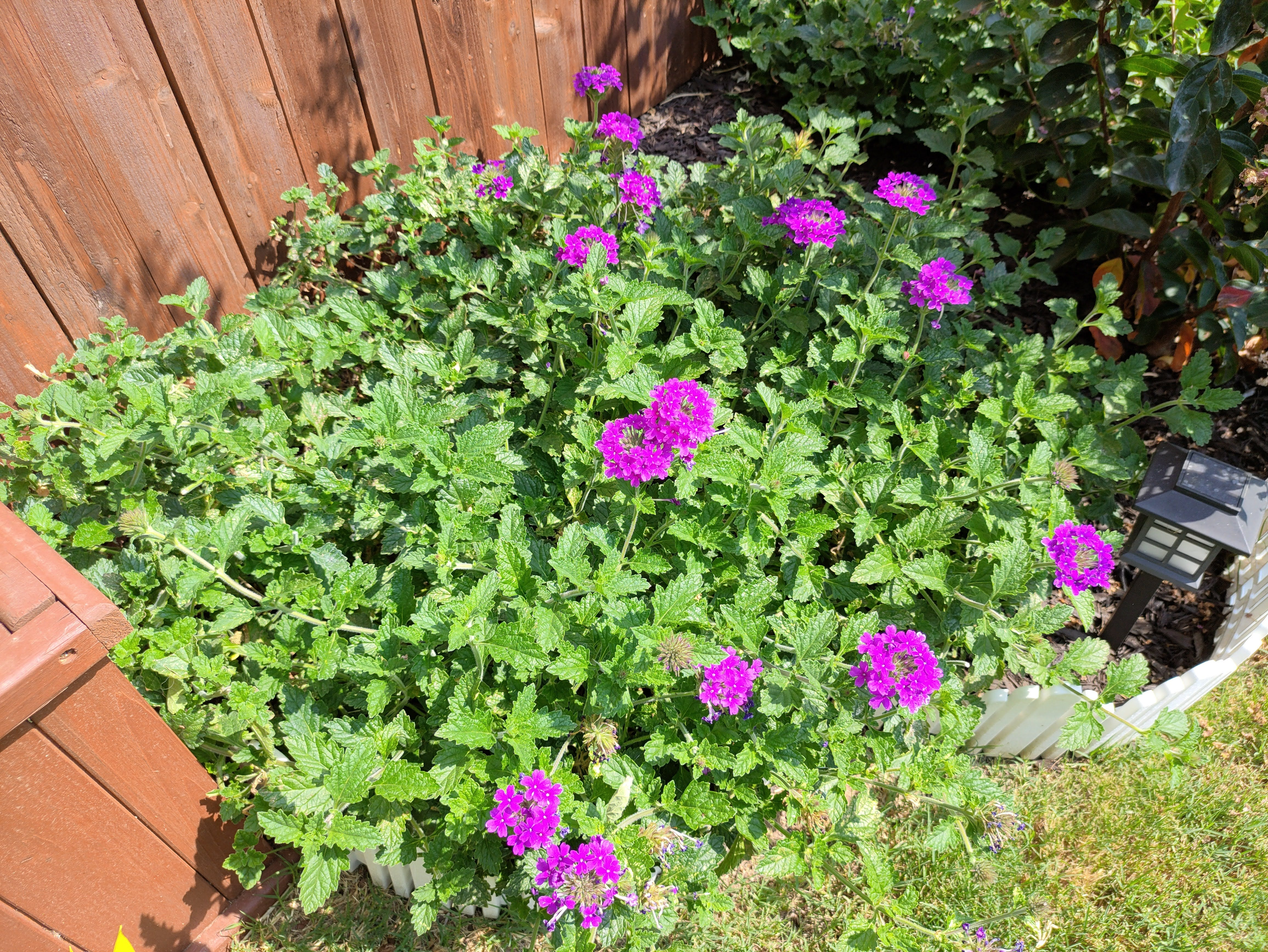 A camera sample with the Red Magic 6R. Bright purple flowers.